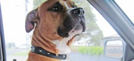 Family traumitised after police shoot treasured pet dog during search warrant in south Auckland